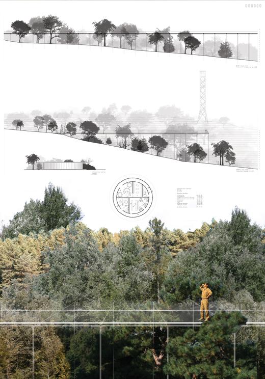 Medžių lajų tako Anykščiuose konkursas LAS architektų sąjunga